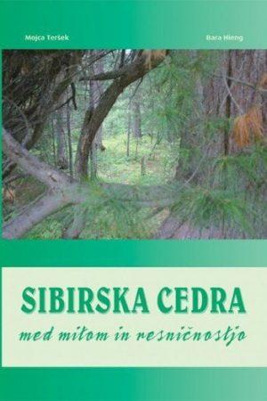 sibirska cedra med mitom in resničnostjo 989 1